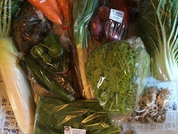旬野菜の詰め合わせ 大地の恵みセット